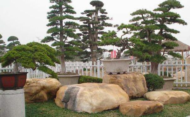 景观石周围适合种什么植物